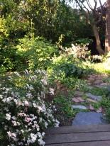 Yard May 20